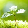 (公財)都市緑化機構と(公社)日本家庭園芸普及協会が、<br /> 全国都市緑化フェアにおける連携と協力に関する包括協定を締結しました。