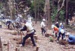 藤沢グリーンスタッフの会 西俣野緑地:雑木林の整備とビオトープづくり01