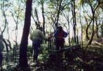 日向山うるわし会 川崎市民健康の森・日向山の森保全活動01