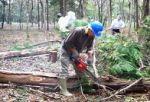 ひだか憩いの森サポートクラブ 里山づくりお助け隊。憩える森は人をつなぎ、地域を育てる01