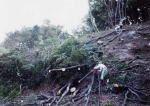 港北ニュータウン緑の会 街中の雑木林・竹林の育成とそこに住む生き物との共生01
