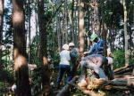 横浜自然観察の森友の会 雑木林ファンクラブ この観察の森を、楽しい森に、美しい森に、そして森の恵みの活用を図ろう01