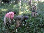東久留米自然ふれあいボランティア 21世紀に創る雑木林復元プロジェクト01