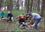 特定非営利活動法人相模原こもれび 木もれびの森の保全と豊かな森づくり01