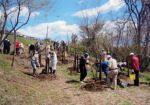 赤羽緑地を守る会 カブト虫の森づくり植栽事業01