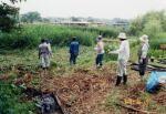 ホタルの里を守る会 水生植物見本園づくり01