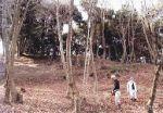 井上「山百合の会」 山百合の里とみんなの森づくり整備プロジェクト事業01