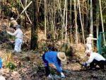 池の川弁天池を復元する会 地域住民が憩える水と樹木の調和した環境づくり01