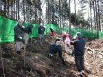 特定非営利活動法人森林塾かずさの森 雪害林地の広葉樹による再生森作り01