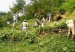 南丘雑木林を愛する会 健全な雑木林を次世代に01