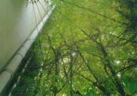 所有:所有・施工・管理:株式会社久保工 内神田サニービル 壁面緑化フジ02