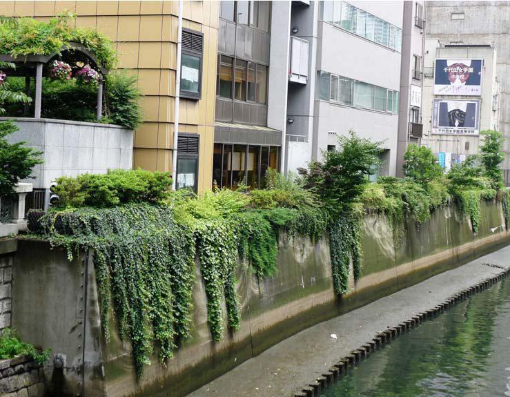 中央区 イビデングリーンテック株式会社 日本橋川護岸(日本橋左岸下流)緑化01 施工後