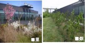 東京農業大学 株式会社久米設計 清水建設株式会社 イビデングリーンテック株式会社 農大アカデミアセンター屋上緑化