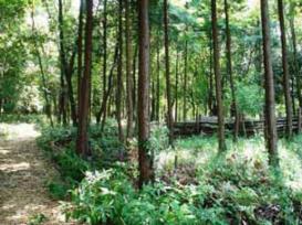 国営昭和記念公園こもれびの丘ボランティア 国営昭和記念公園02