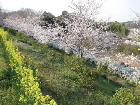 光風台 花と緑の会 光風(こうふう)台(だい)ガーデン01