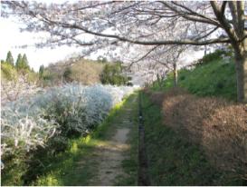 光風台 花と緑の会 光風(こうふう)台(だい)ガーデン02