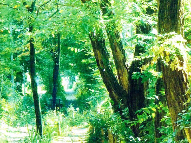 船橋小径の会 世田谷区地域風景資産 季節の野草に出会う小径01