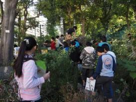 豊島区立仰高小学校 NPO法人コミュニティランドスケープ 仰高樟の樹 ビオトープの里山けやき会02