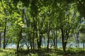 東京建物株式会社 大成建設株式会社 内山緑地建設株式会社 大手町の森03 野生を併せ持ち、生態系を豊かにする