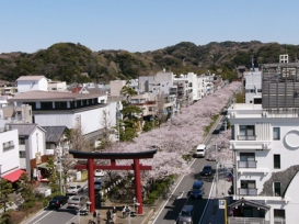 鎌倉市 鎌倉市緑の基本計画推進の取り組み02