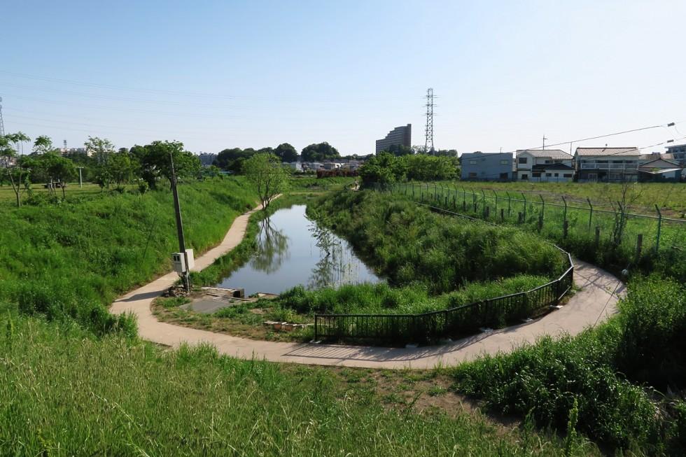 朝霞市 朝霞市 緑と水辺を守り育む取り組み01