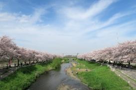 朝霞市 朝霞市 緑と水辺を守り育む取り組み02