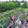 国立大学法人電気通信大学佐藤証研究室 UEC Hydroponic Farm