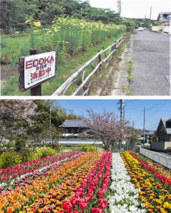 ECOKA委員会 花と緑の四季彩まちづくり03