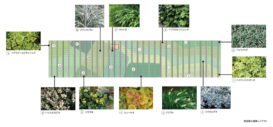 ESR株式会社 渡辺美緒デザイン事務所合同会社 ESR市川ディストリビューションセンター03 塩害に配慮した植栽選定