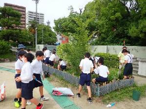 第37回全国都市緑化ひろしまフェア 「平和のバラ」プロジェクト